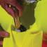 SOS Dan Buoy - Self-Inflating Man Overboard Marker Buoy 5
