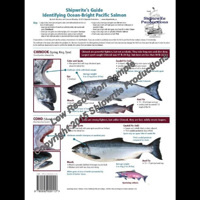 sh0110 of Nautical Books Shipwrite's Guide, Identifying Pacific Salmon