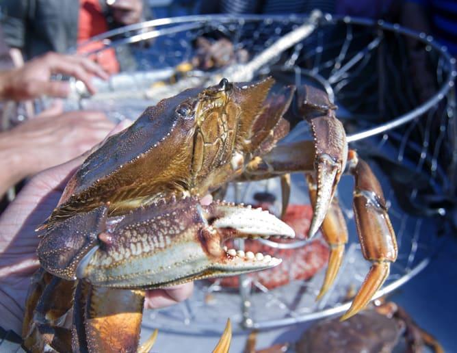 Crab & Shrimp Gear Sale